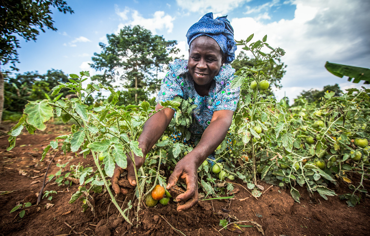 How Space Technology Is Transforming Africa S Food System